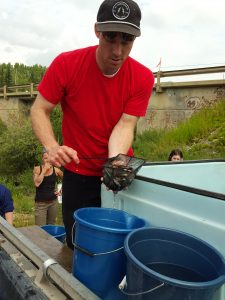Renewable Resources Technician Phil Emerson transfers Chinook salmon fry into buckets at Fox Creek on July 17.